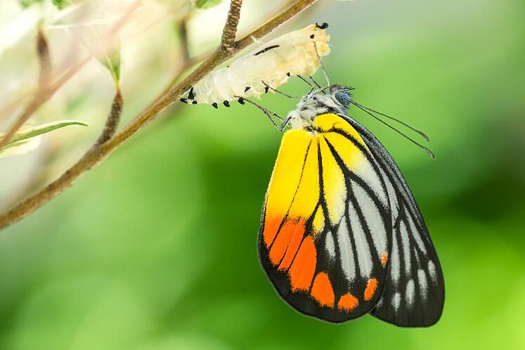MARTECH is more about butterflies than unicorns
