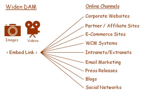 Widen Digital Asset Embed Links
