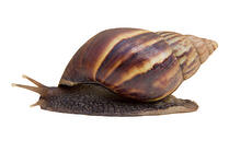 snail - the slow downs that come with installed digital asset management software