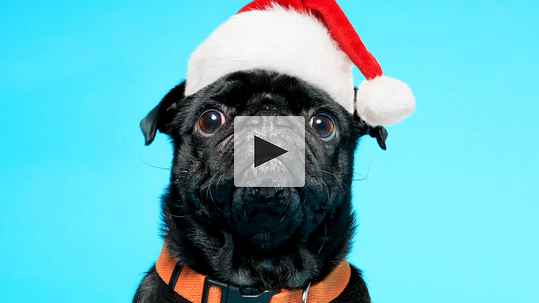 Happy holidays from your friends at Widen. Watch the video.