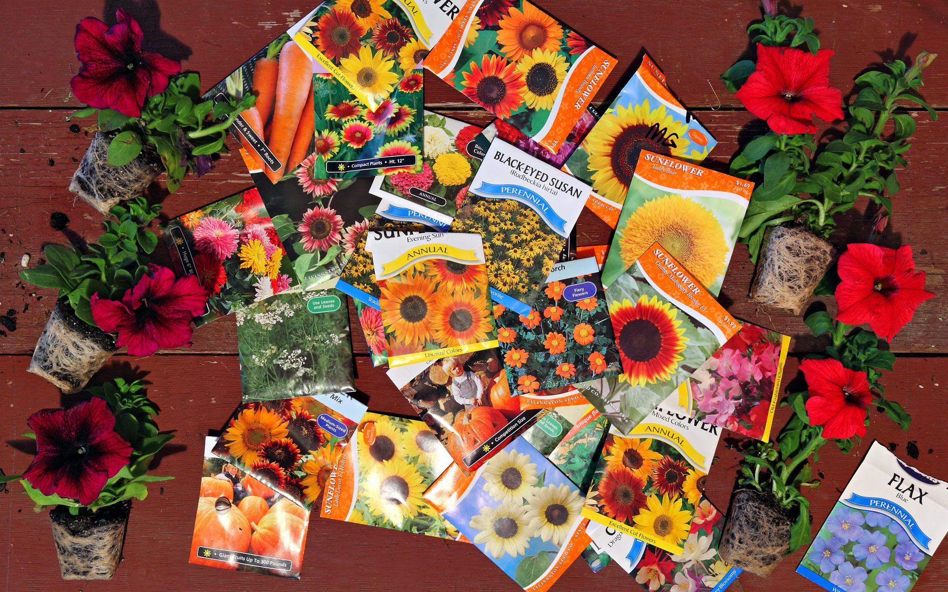 garden photography backgroundat